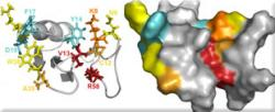 Shedding light on α scorpion toxin binding site on sodium-channels