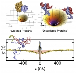 Dynamics of disordered proteins