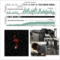 In vivo single-molecule tracking