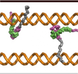 Protein-DNA recognition