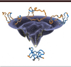 Protein Folding and Binding