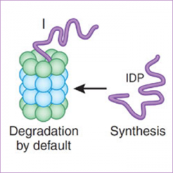 Intrinsically Disordered Proteins (IDPs)