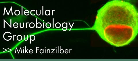 Fainzilber