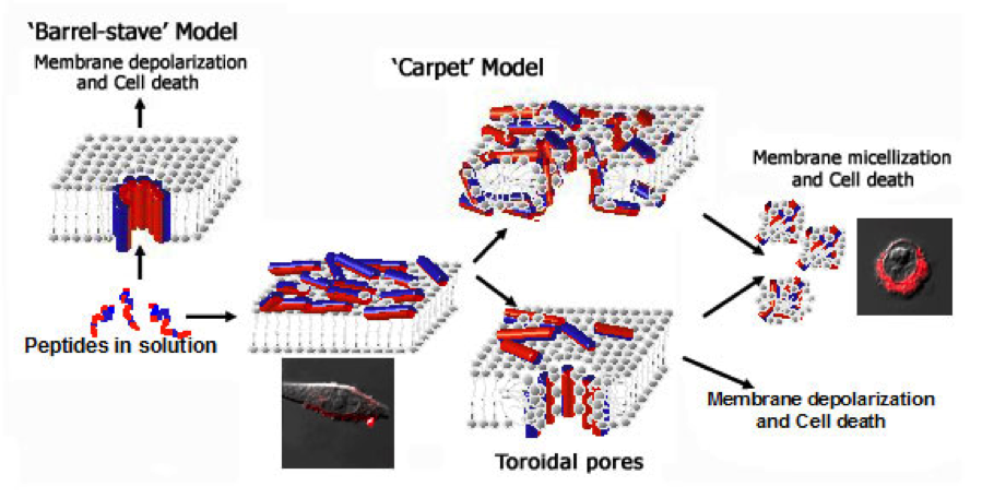 Carpet Model figure