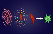 Molecular mechanisms of stromal reprogramming