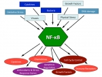 Triggers and effectors of the NF-kB pathways