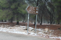 The Yatir Forest - Snow in 2013 picture no. 1