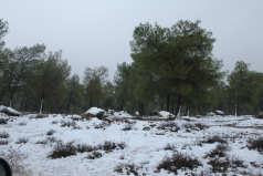 The Yatir Forest - Snow in 2013 picture no. 4