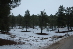 The Yatir Forest - Snow in 2013 picture no. 5