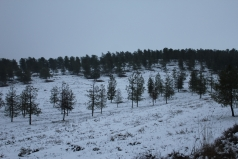 The Yatir Forest - Snow in 2013 picture no. 6