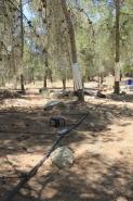 Yatir Irrigation Experiment 2015 picture no. 12
