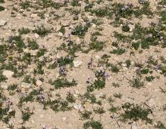 Wadi Heimar 2019 picture no. 5