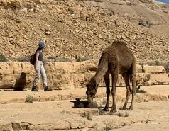 Wadi Heimar 2019