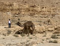 Wadi Heimar 2019 picture no. 1