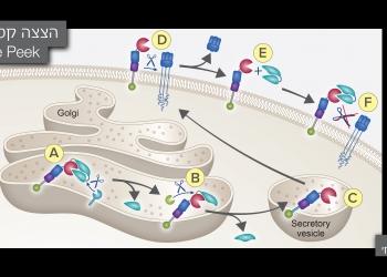 Scientific Illustration picture no. 11