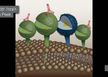 Scientific Illustration picture no. 12
