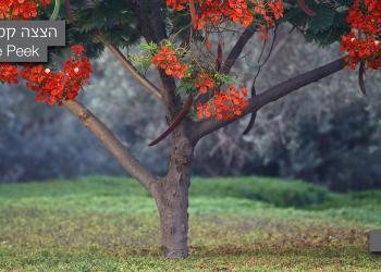 Landscape picture no. 8