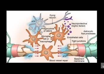 Scientific Illustration picture no. 3