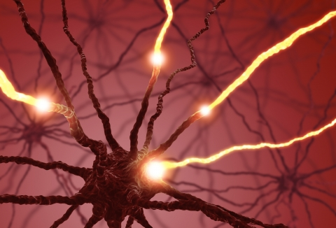 Neurons showing electronic pulses transferring information in the brain