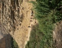 Wadi Kelt picture no. 26