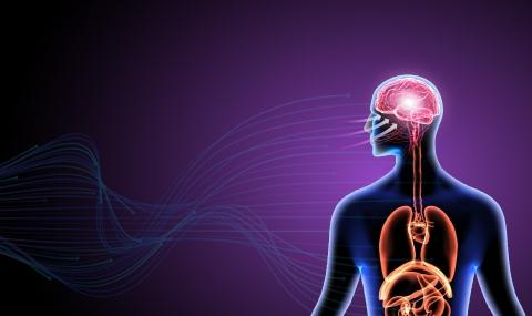 Neuroscience of brain-body communication