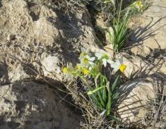 2014 - Lab Trip to Wadi Hatzatz and Wadi Daroch picture no. 6