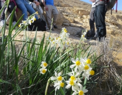 2014 - Lab Trip to Wadi Hatzatz and Wadi Daroch picture no. 13