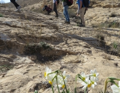 2014 - Lab Trip to Wadi Hatzatz and Wadi Daroch picture no. 15