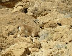 2014 - Lab Trip to Wadi Hatzatz and Wadi Daroch picture no. 61
