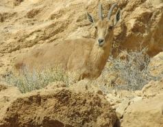 2014 - Lab Trip to Wadi Hatzatz and Wadi Daroch picture no. 62