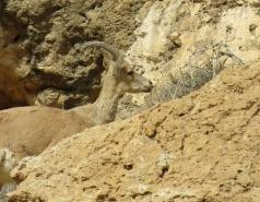 2014 - Lab Trip to Wadi Hatzatz and Wadi Daroch picture no. 64