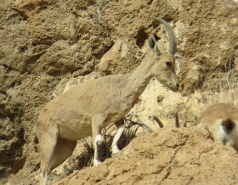 2014 - Lab Trip to Wadi Hatzatz and Wadi Daroch picture no. 66