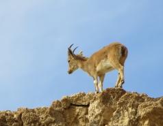 2014 - Lab Trip to Wadi Hatzatz and Wadi Daroch picture no. 68
