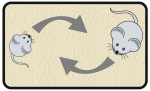 Diagram of two mice engaged in social behavior
