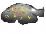 Hyperpolarized NMR & MRI: Methods Development and Applications