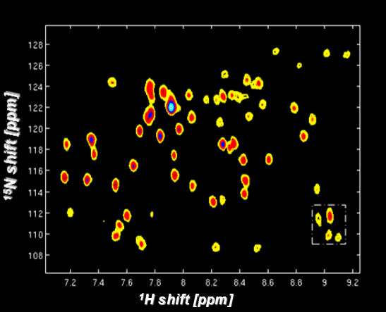Protein Structure & Dynamics with nD Ultrafast NMR