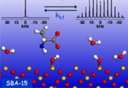 Solid State NMR: Dynamics in Host-Guest Systems