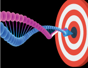 Target location during horizontal gene transfer