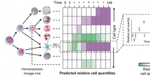 Digital cell quantification identifies global immune cell dynamics during influenza infection