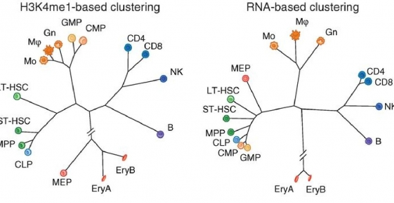 Chromatin state dynamics during blood formation