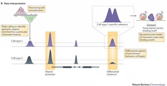 Making the case for chromatin profiling: a new tool to investigate the immune-regulatory landscape