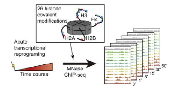 High-Resolution Chromatin Dynamics during a Yeast Stress Response