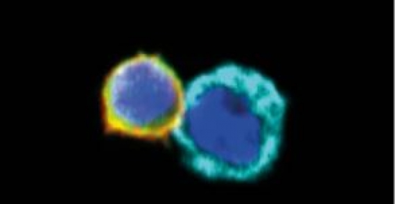 Dissecting cellular crosstalk by sequencing physically interacting cells
