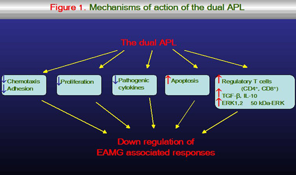 Mechanisms of action of the dual APL