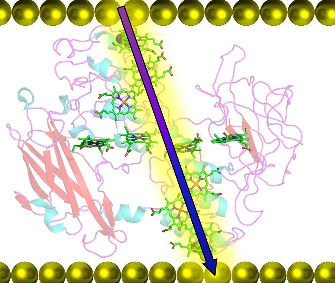Bio-molecular electronics
