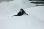 Dog in Snow – Telluride, USA