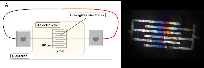 Electrodes for electro-freezing