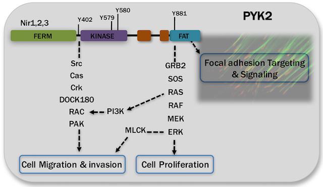 Cell Signaling & Signaling Rewiring