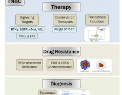 Current ongoing projects on TNBC (Sima Lev Lab)