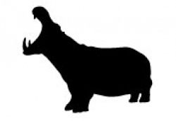 The Hippo pathway